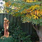 Japanese elm in autumn
